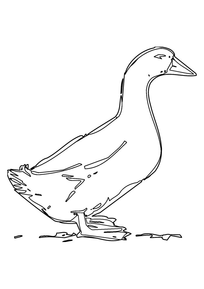 duck coloring page 25