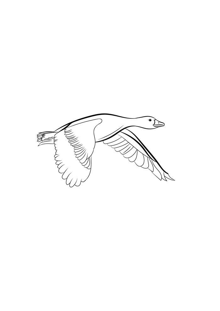 duck coloring page 28
