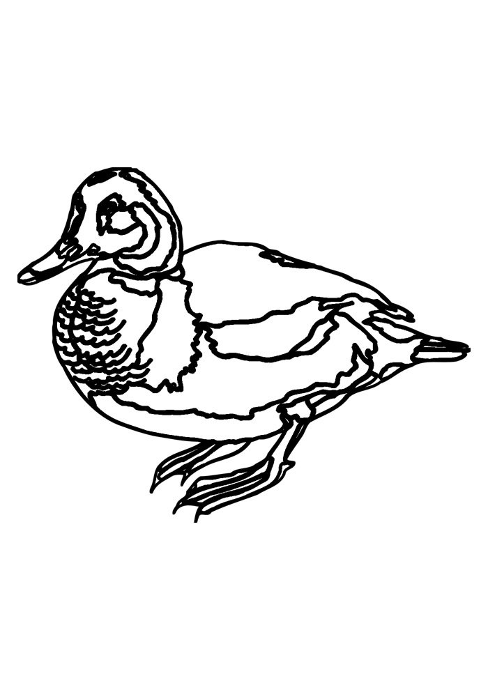 duck coloring page 37