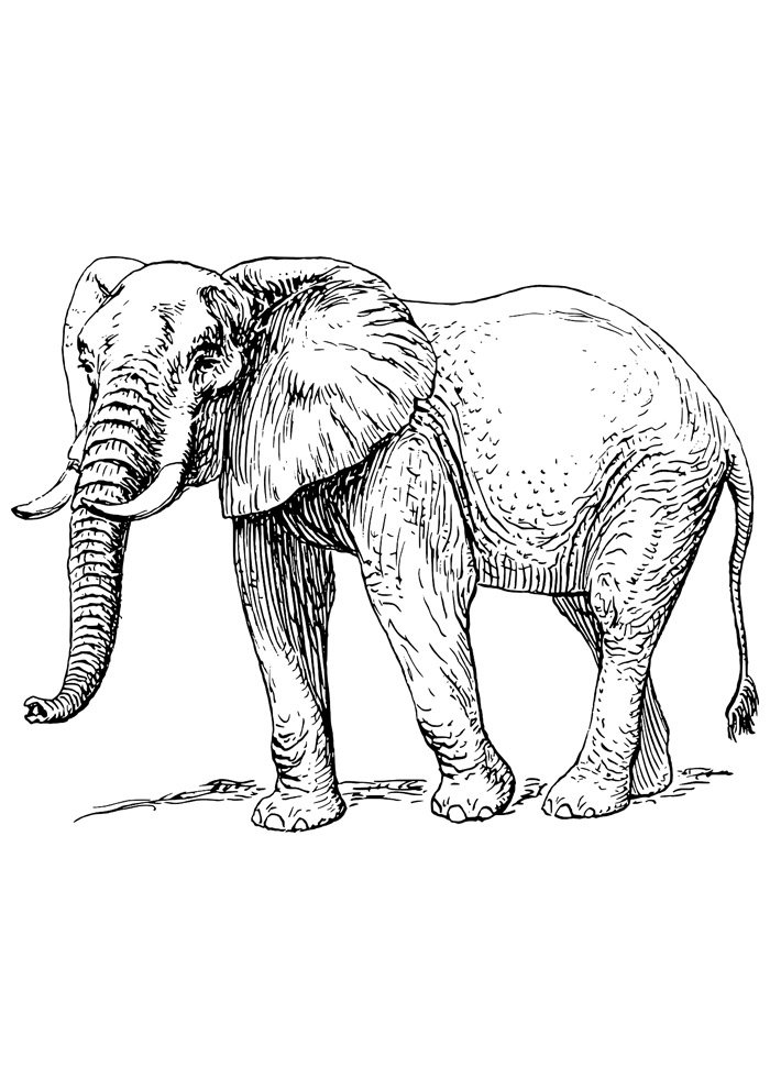 elephant coloring page 11