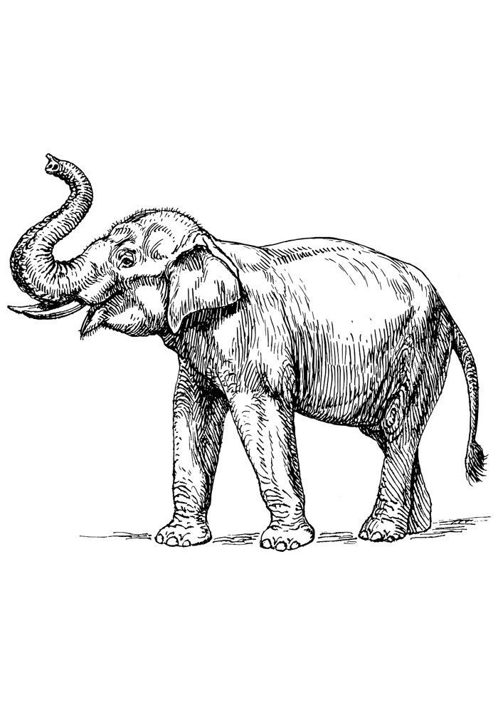 elephant coloring page 14