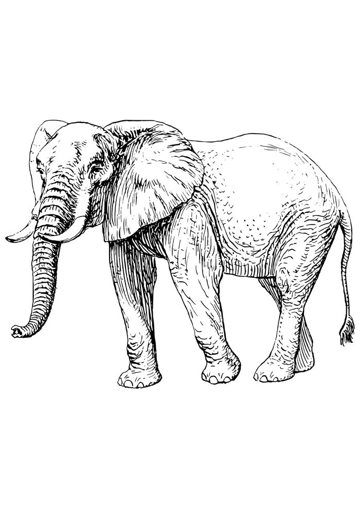 Elephants coloring pages | Free Coloring Pages | 990x700