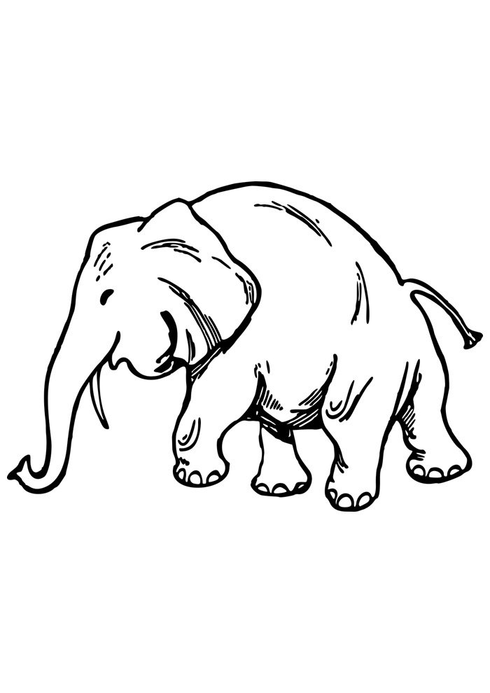elephant coloring page 5