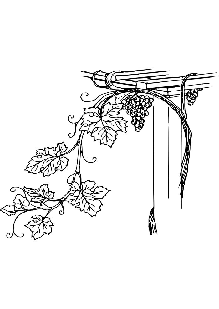 fruit coloring page 38