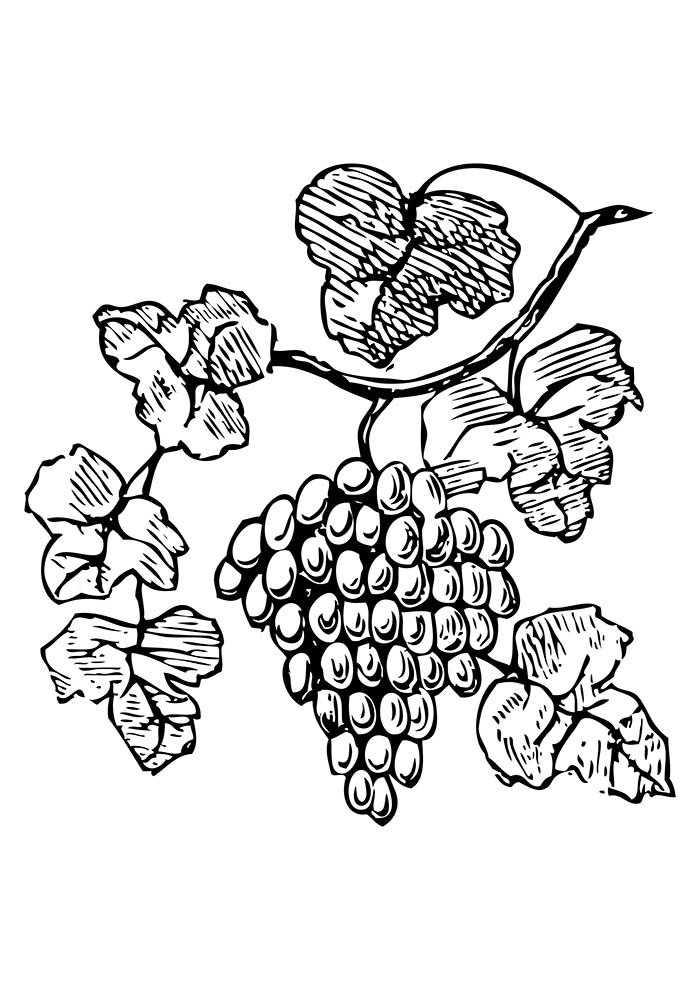 fruit coloring page 6
