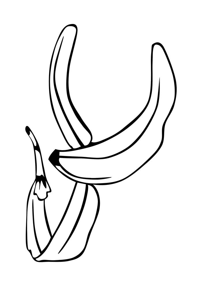 fruit coloring page 8