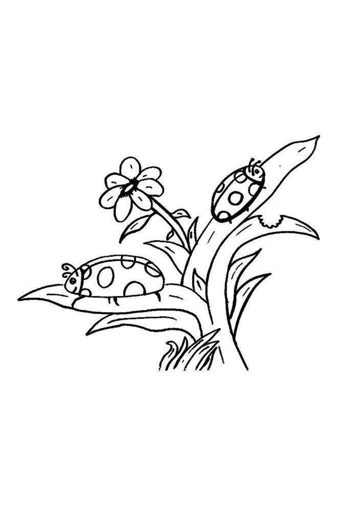 ladybug coloring page 7