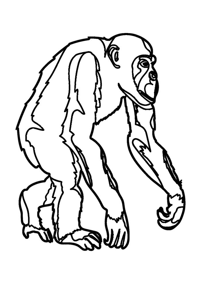 monkey coloring page 11