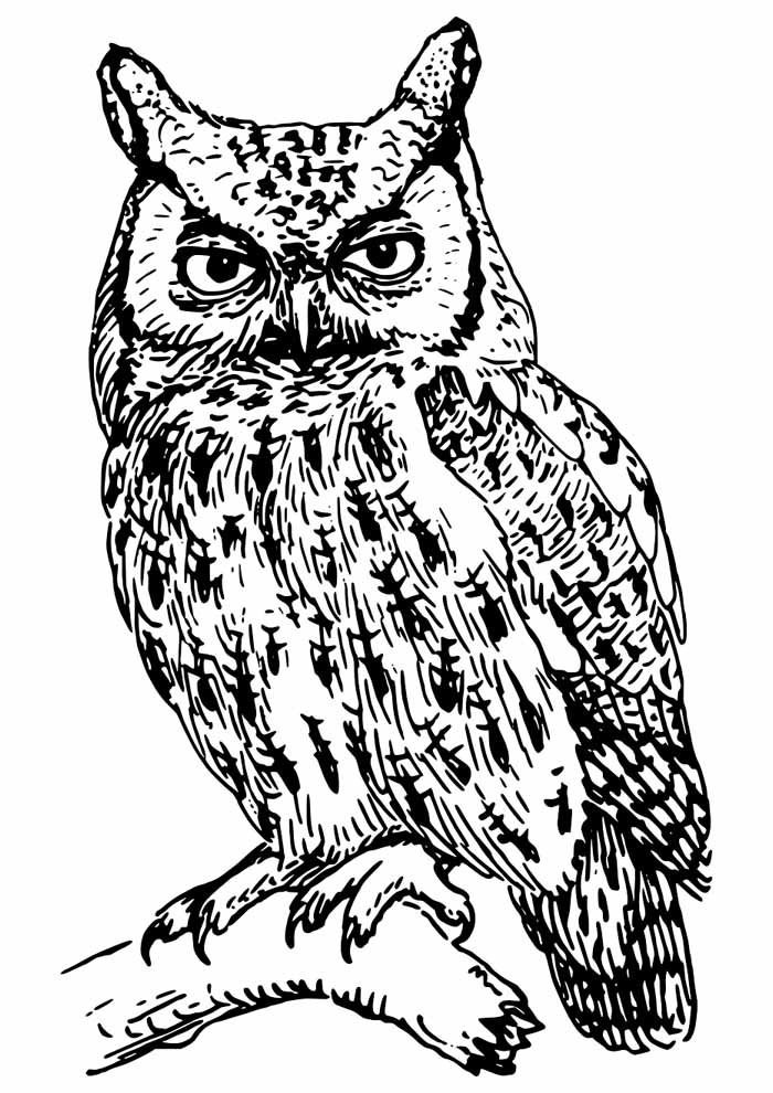 owl coloring page 10