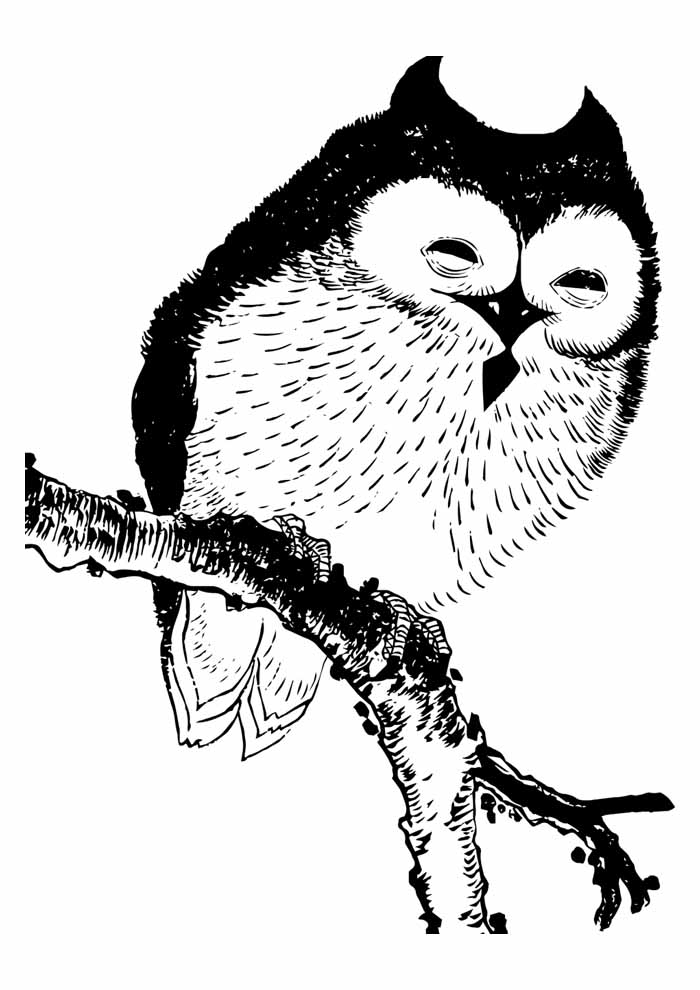 owl coloring page 43