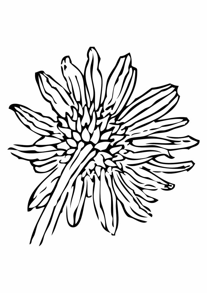 sunflower coloring page 1