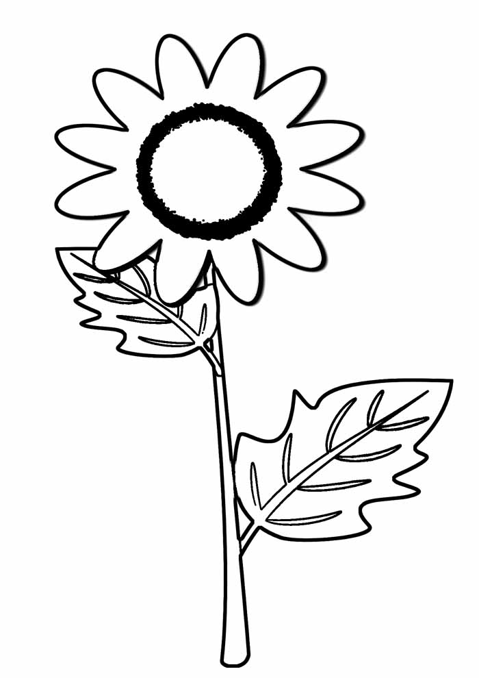 sunflower coloring page 11