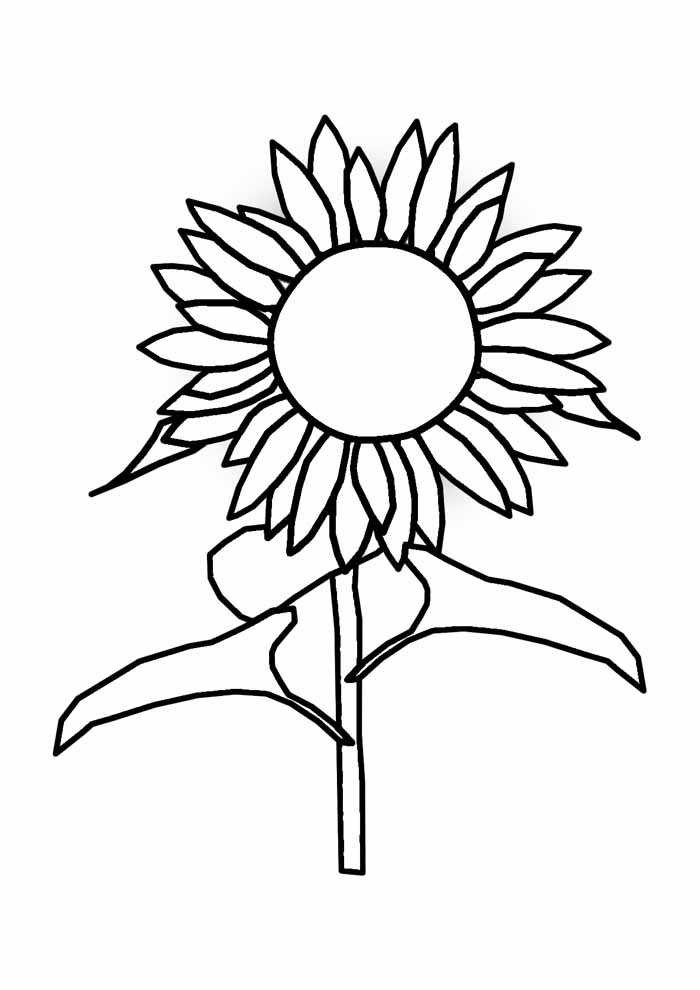 sunflower coloring page 12