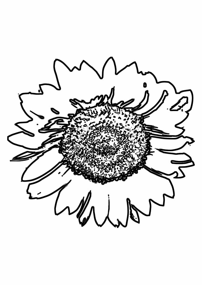 sunflower coloring page 13