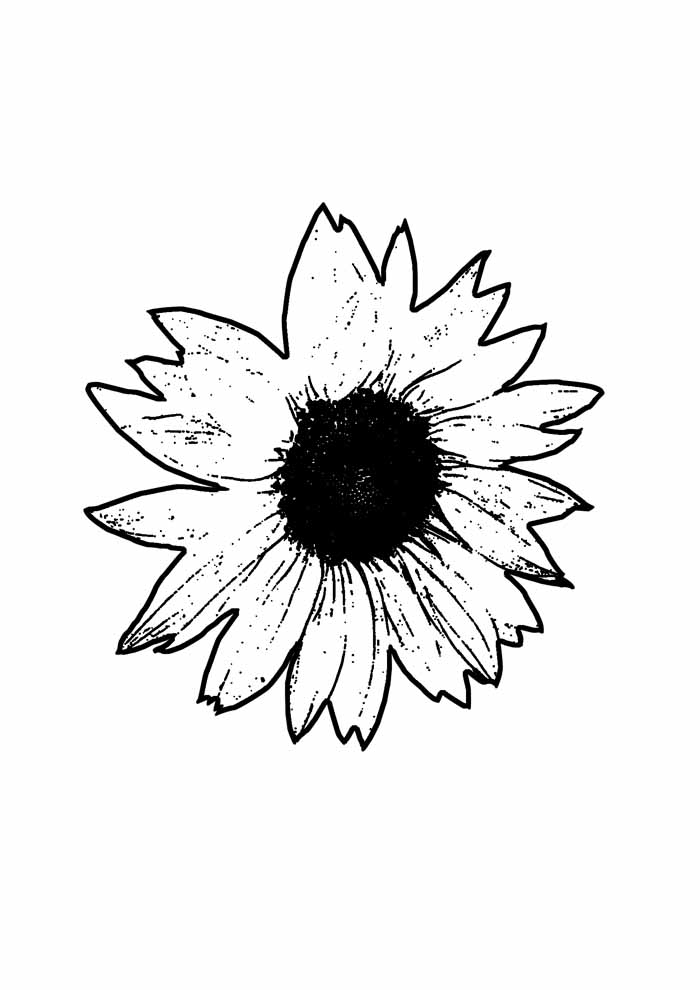 sunflower coloring page 22