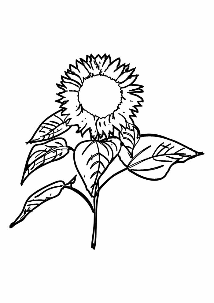 sunflower coloring page 23