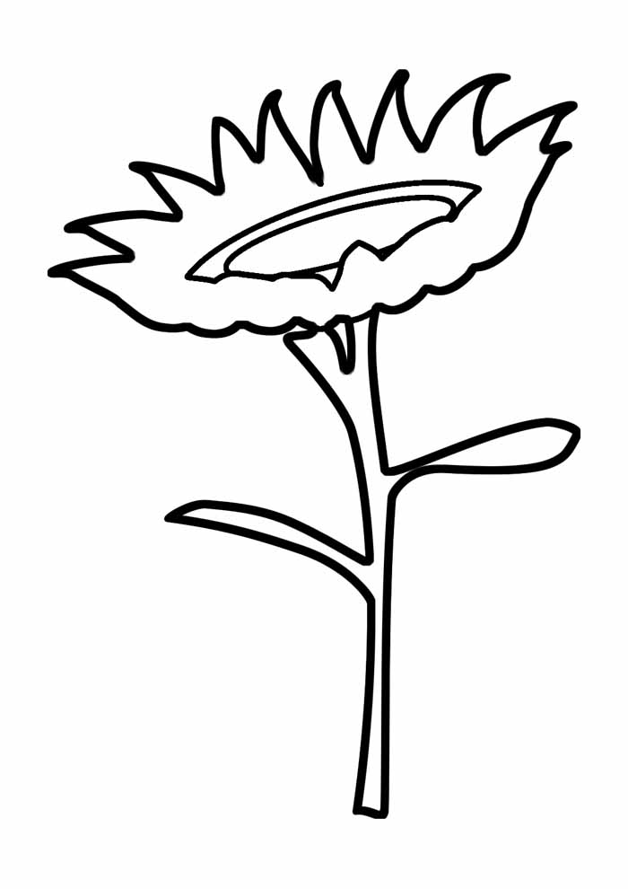 sunflower coloring page 26
