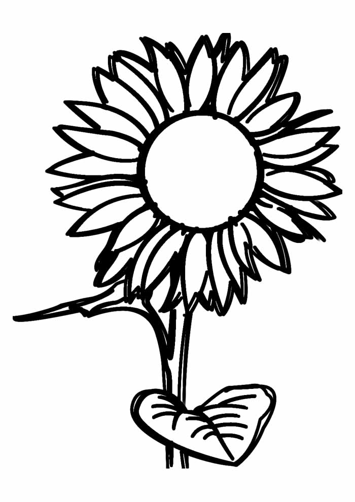 sunflower coloring page 29