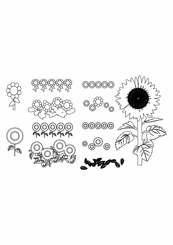 sunflower coloring page 35