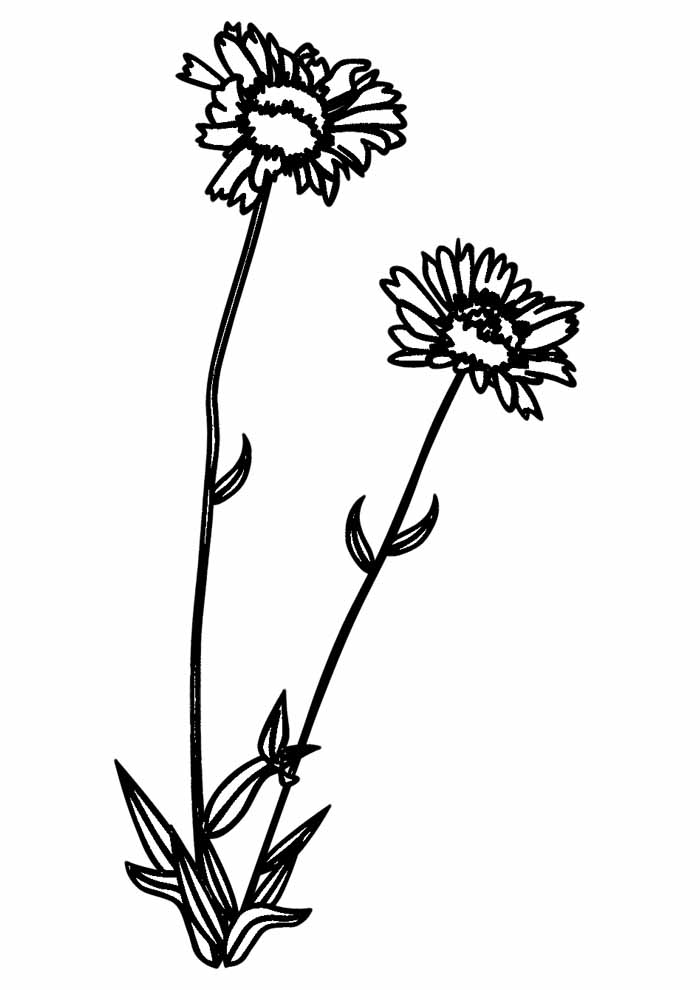 sunflower coloring page 4