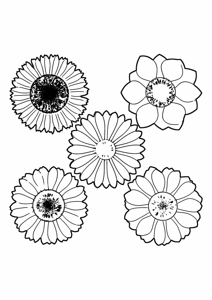sunflower coloring page 6