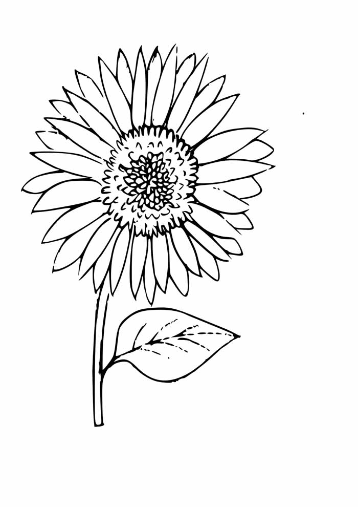 sunflower coloring page 7