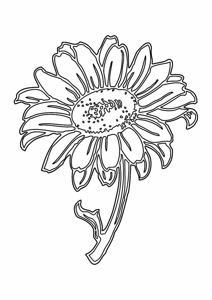 sunflower coloring page 9