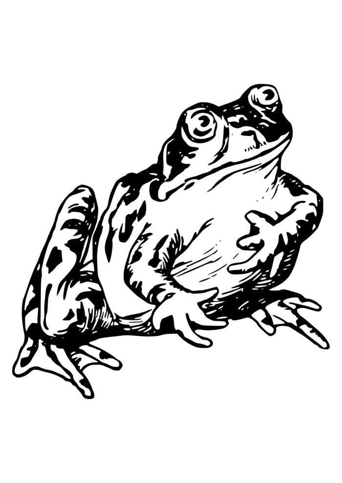 frog coloring page 34