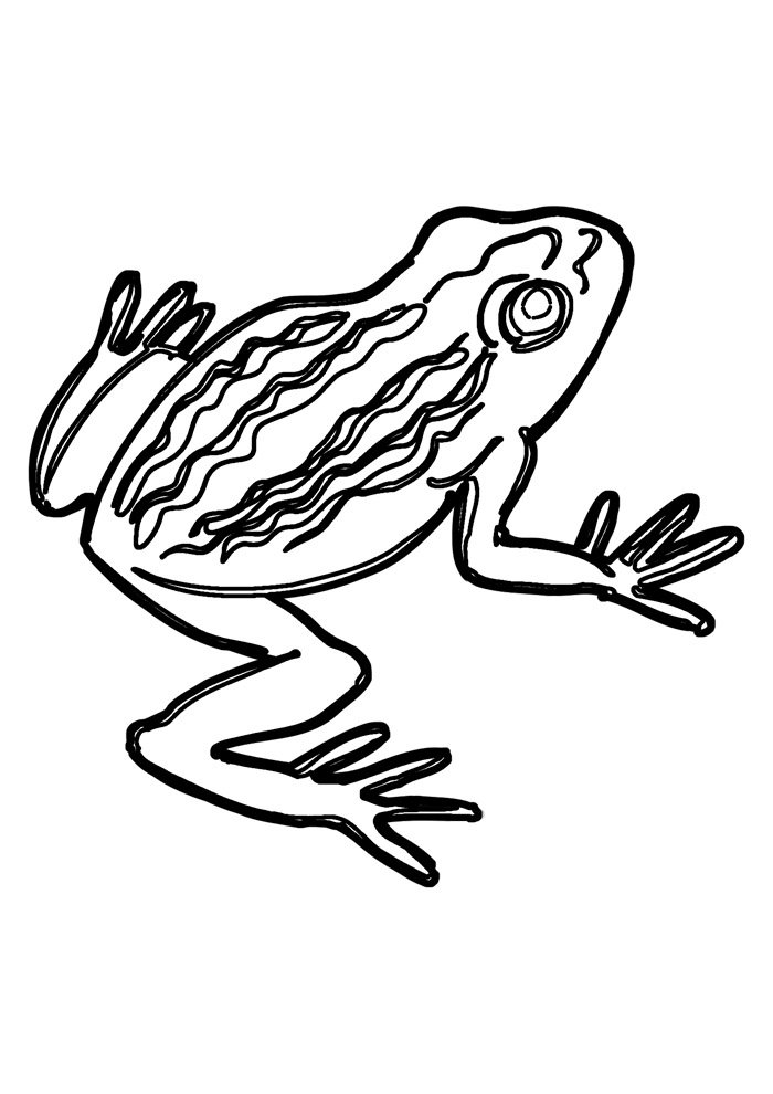 frog coloring page 8