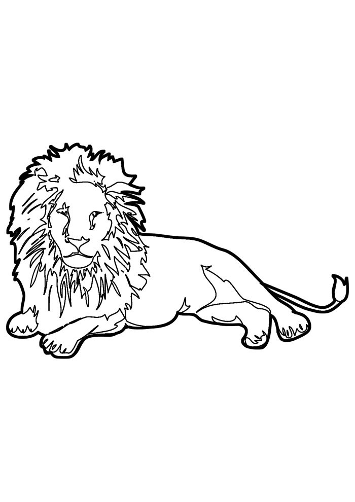 lion coloring page 21