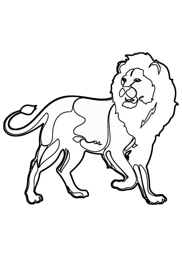 lion coloring page 35