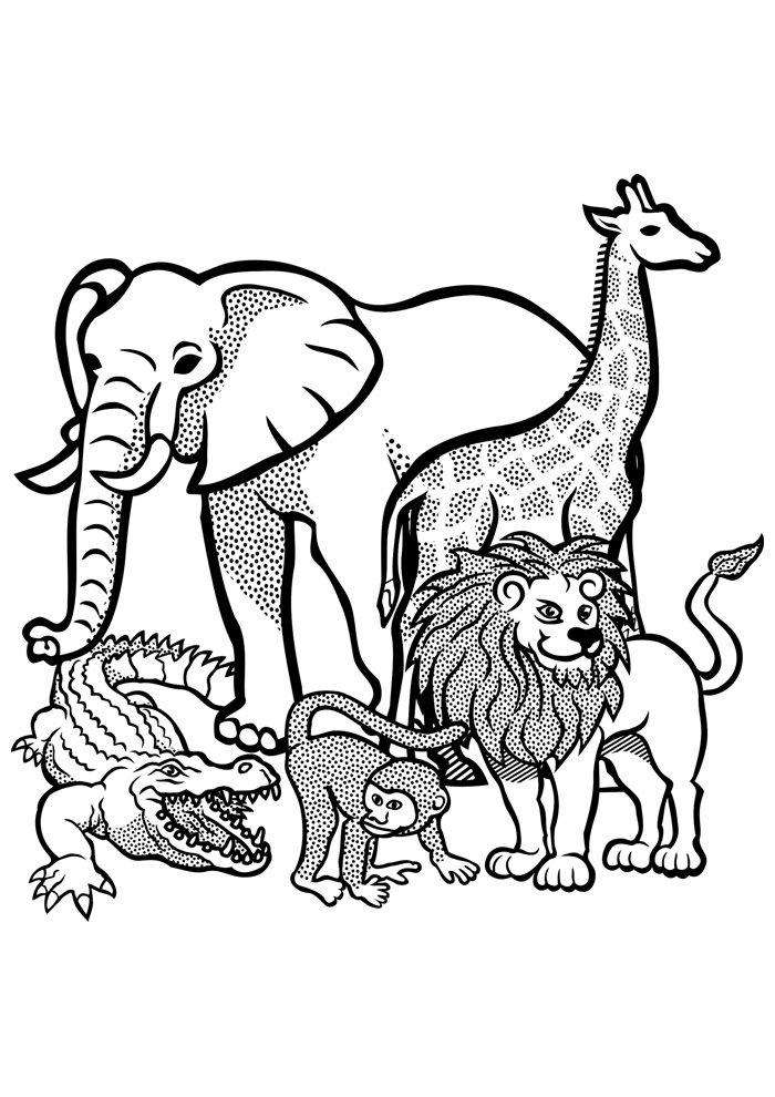 lion coloring page 4
