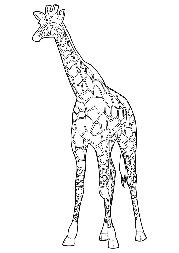 giraffe coloring page 3