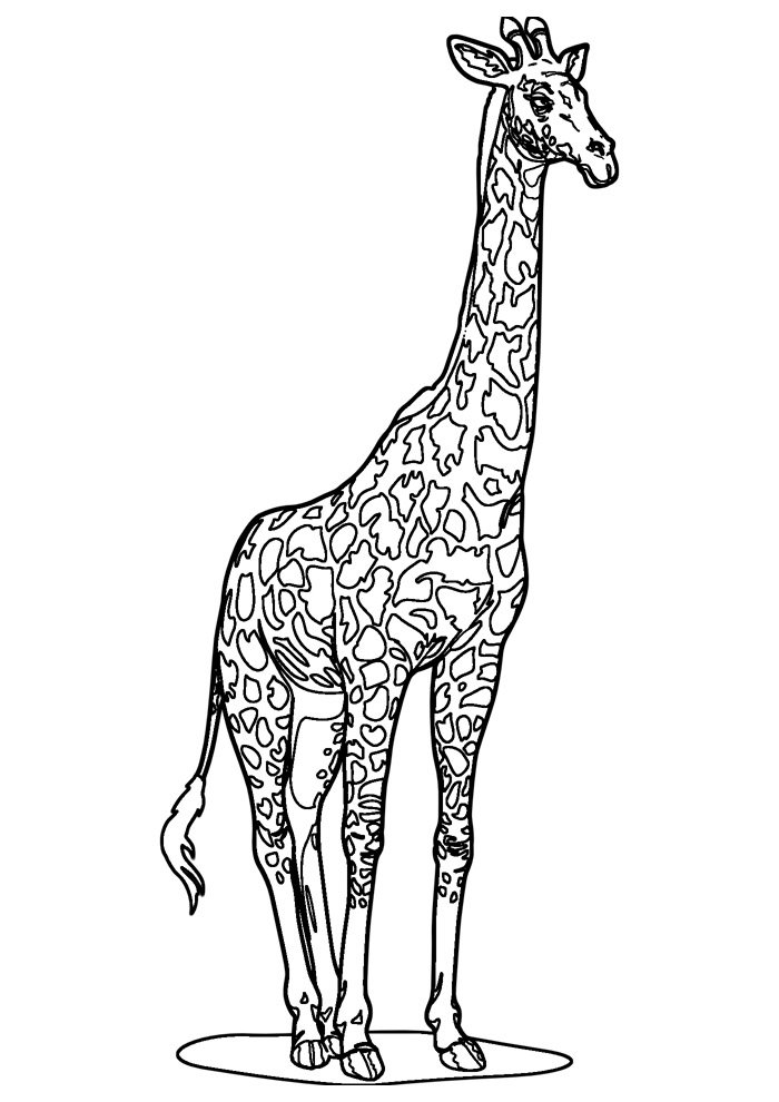 giraffe coloring page 6