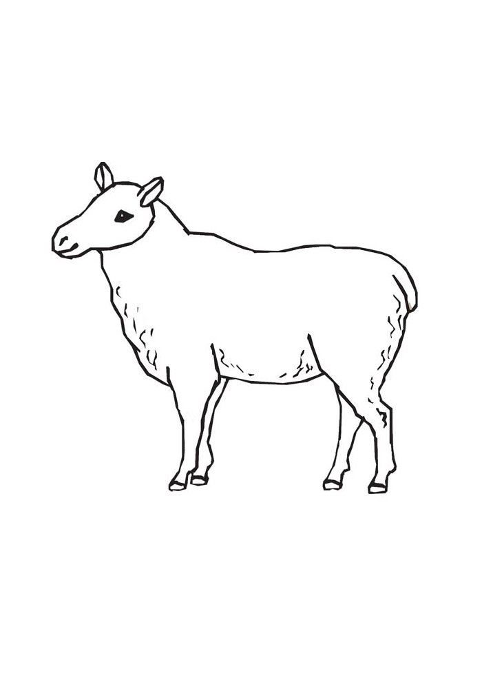 sheep coloring page 18
