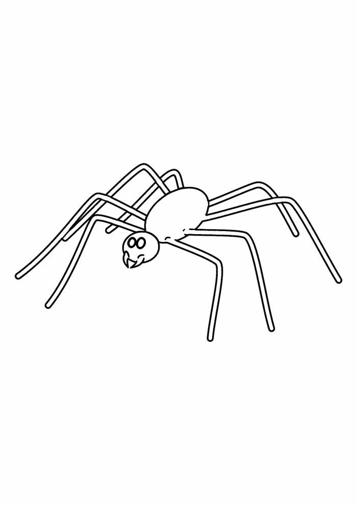spider coloring page 10