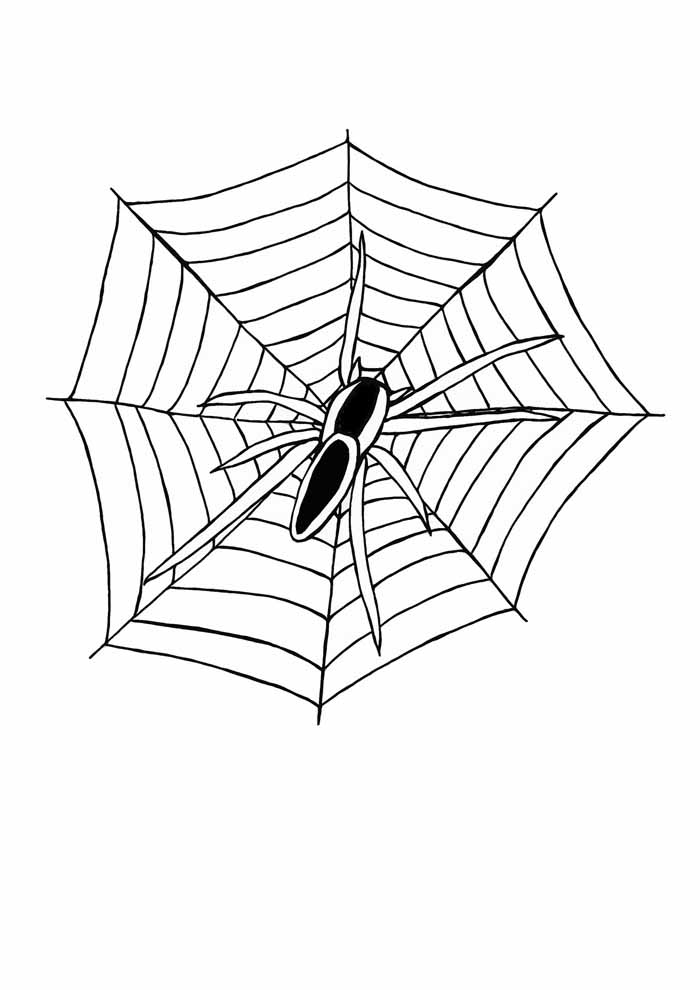 spider coloring page 21