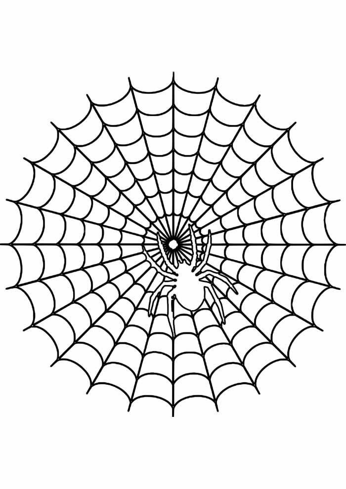 spider coloring page 27