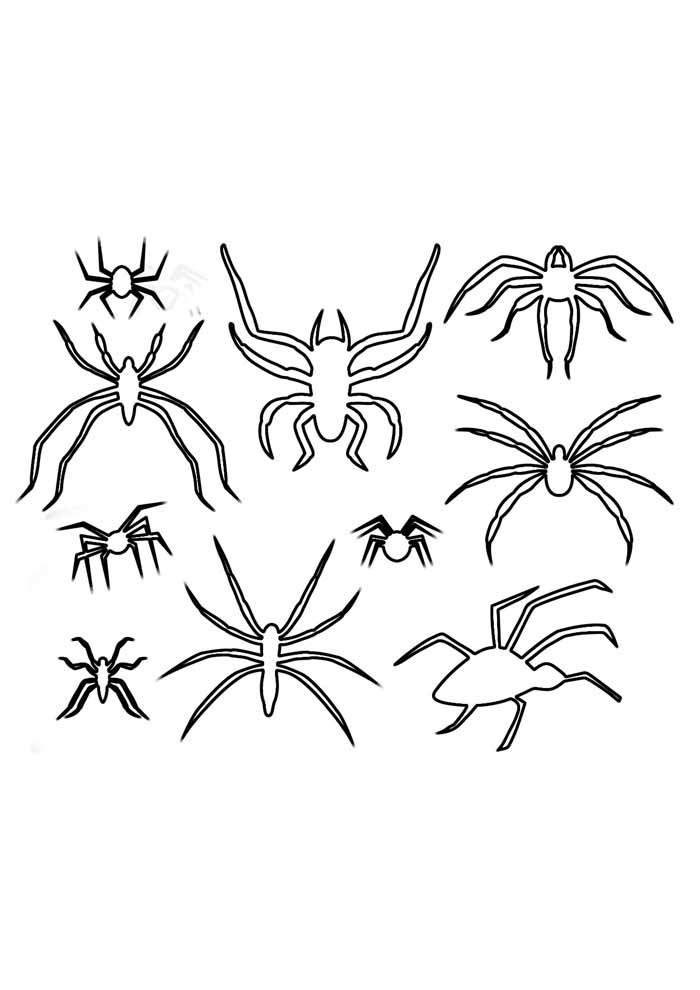 spider coloring page 30