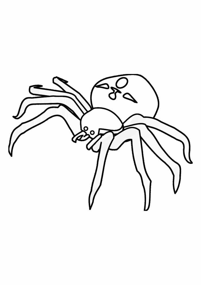 spider coloring page 9