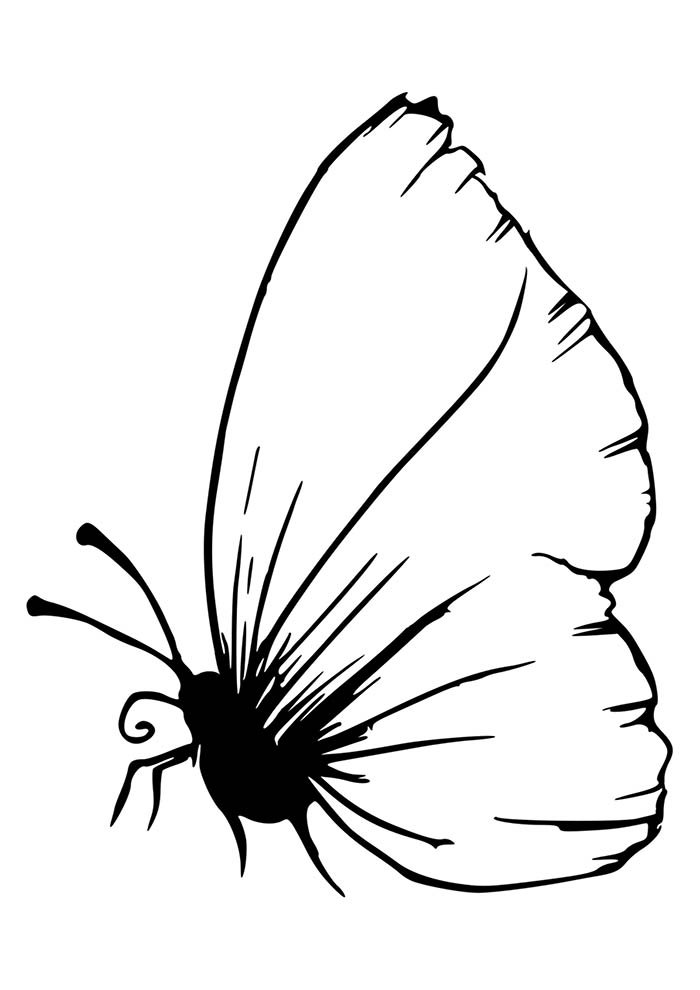 animal coloring page 2