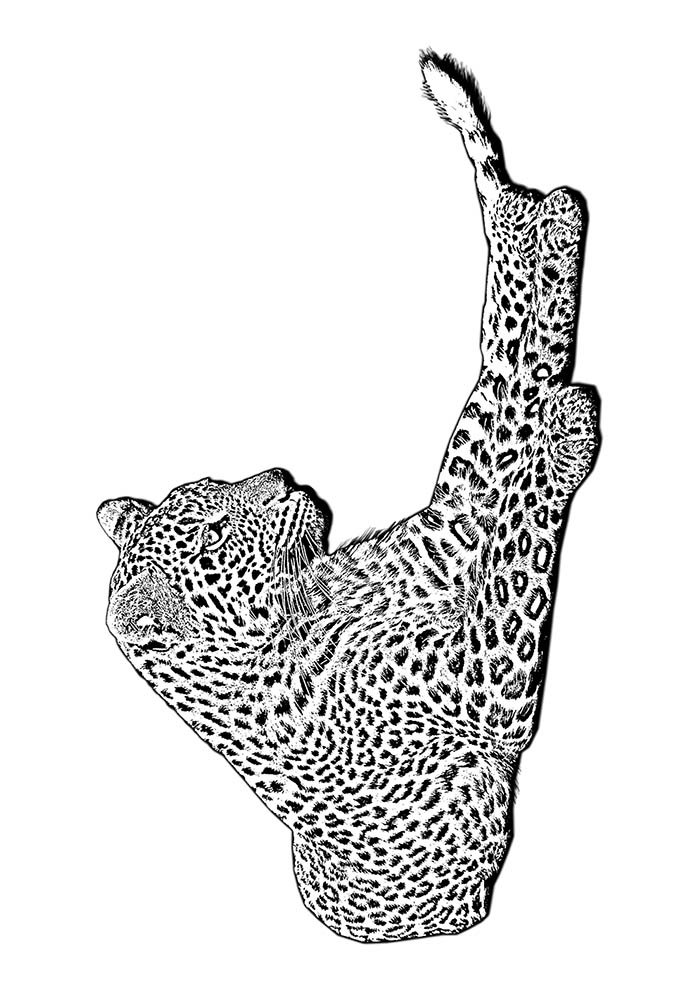 animal coloring page 25