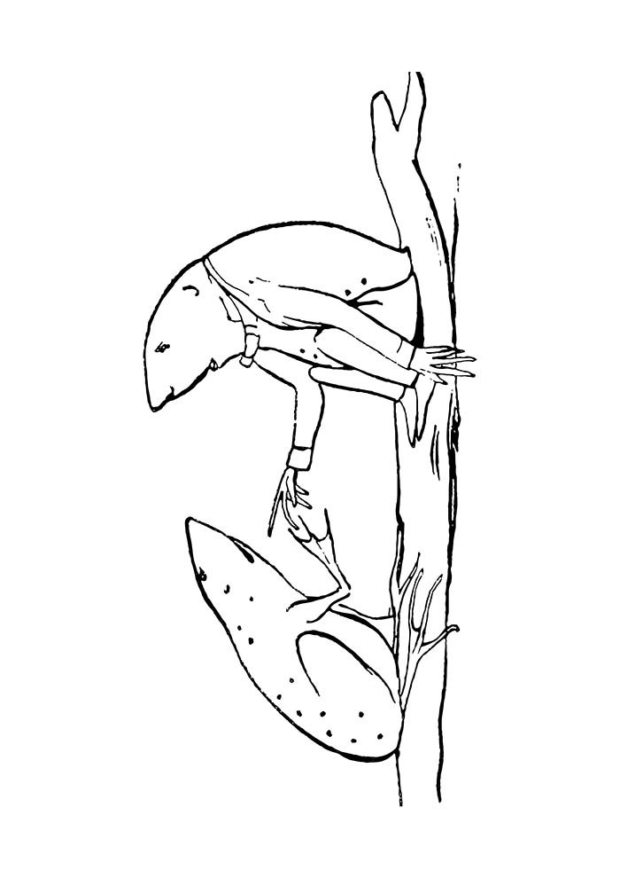 animal coloring page 36