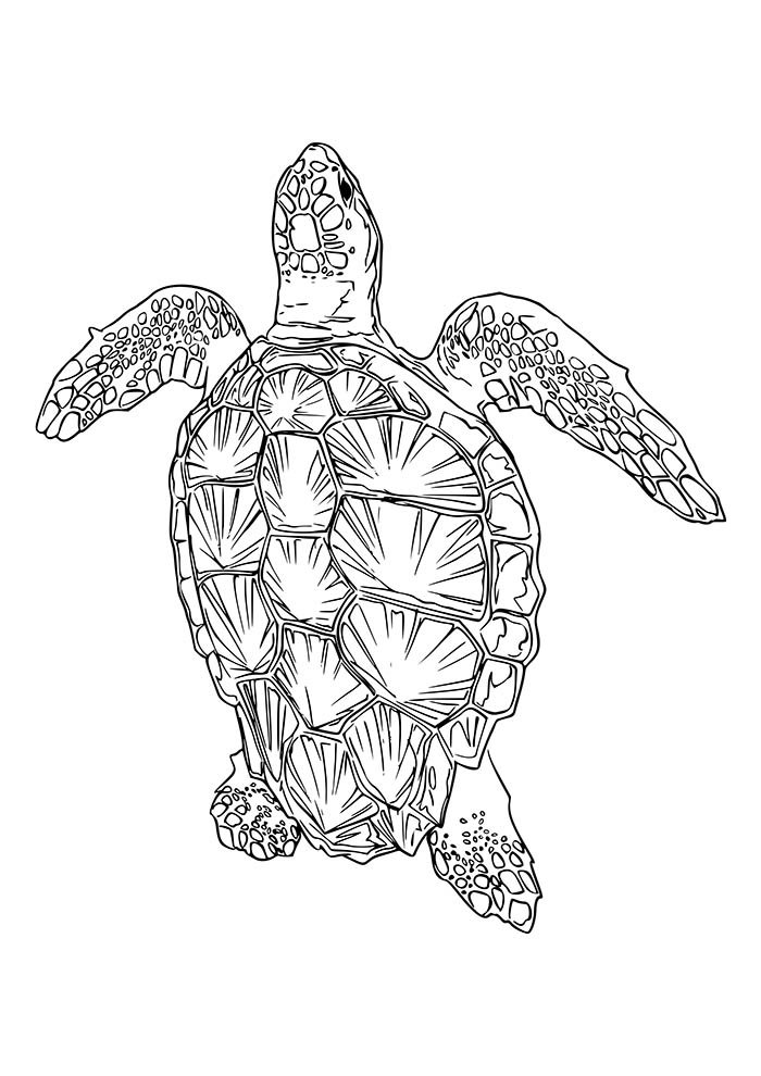 animal coloring page 38